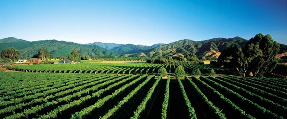 Best Winery Restaurant In Hawkes Bay